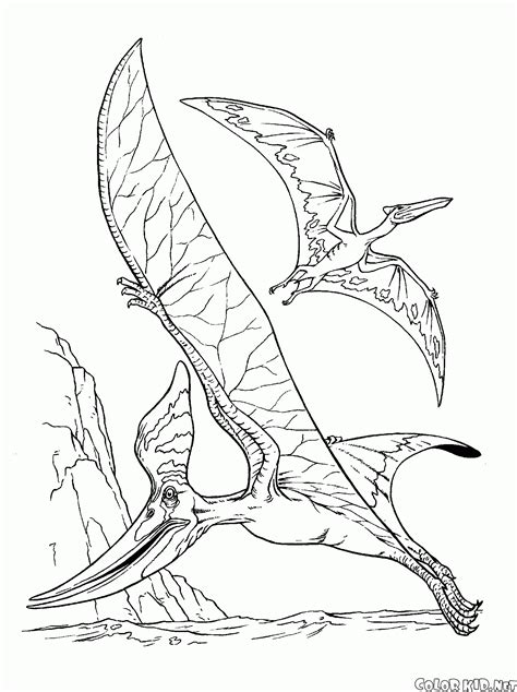 Coloring Page Pteranodon And A Pterodactyl Pterodactyl Coloring Pages