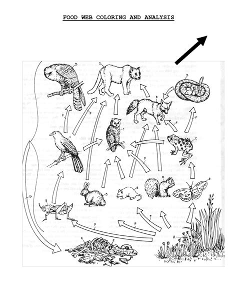 coloring pages of food webs food web coloring sheet scope of work template life