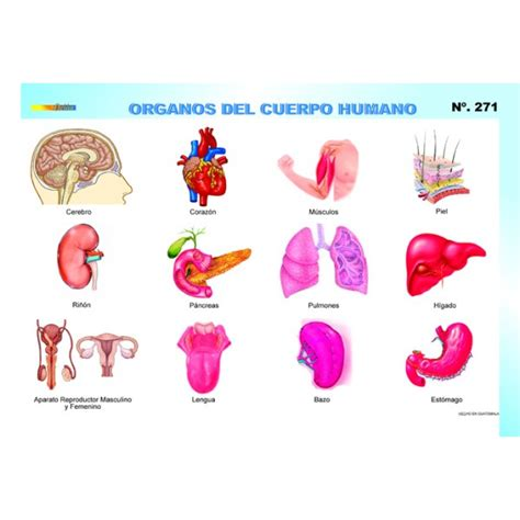 imagenes de los nombres del cuerpo humano en ingles 211 rganos del cuerpo humano twiwaminenu