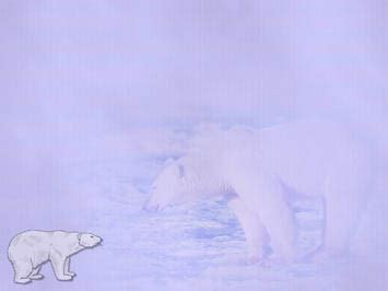 polar bear 11 powerpoint templates