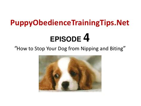 how to get a puppy to stop nipping your puppy to stop biting through puppy obedience