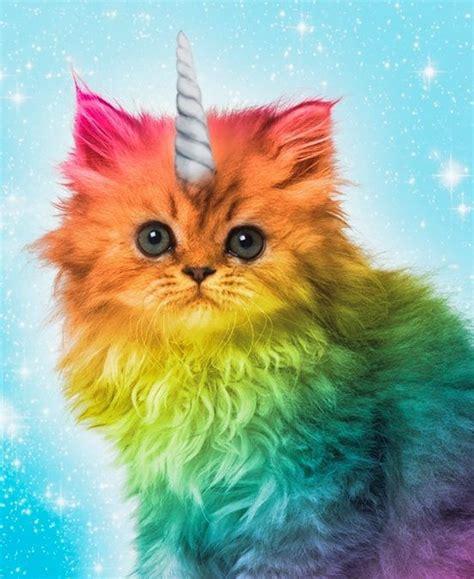 wallpaper cat unicorn cat riding unicorn google search cats are awesome