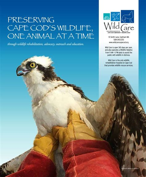 wildcare cape cod preserving cape cod s wildlife one animal at a time
