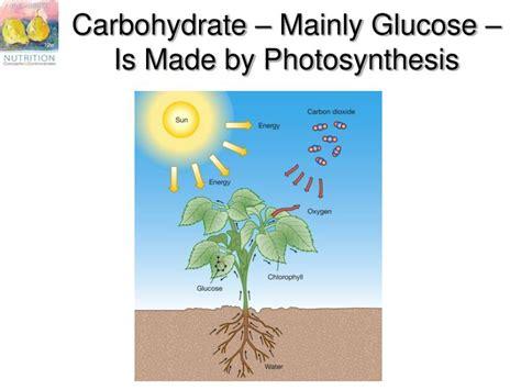 carbohydrates glucose ppt chapter 4 carbohydrates sugar starch glycogen