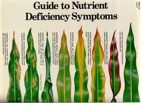 nutrient deficiency diagnosis a visual reference to nutrient deficiencies in plants gardening landscaping