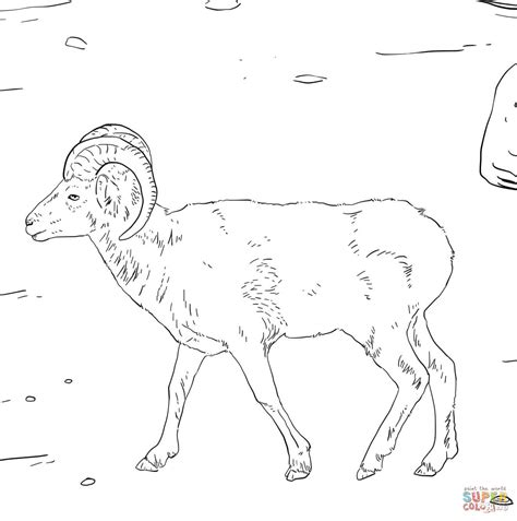 mountain sheep coloring page dall s sheep coloring page free printable coloring pages