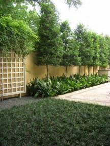 small backyard trees for privacy 17 best images about outside on arbors day