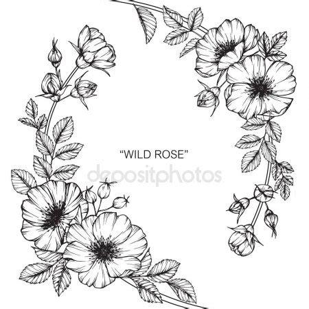 野玫瑰花 黑白线条画素描 图库矢量图像 169 suwi19 169910776