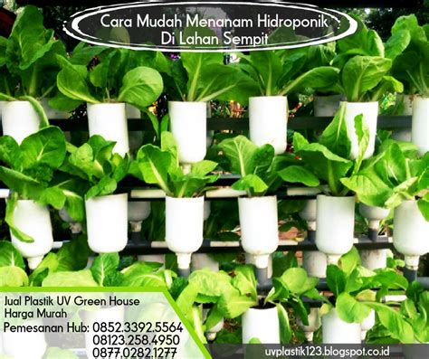 Jual Plastik Uv Hercules cara mudah menanam hidroponik di lahan sempit pabrik dan