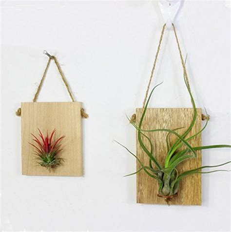 air plant wall holder zondam wall hanging air plant holder tillandsia planter