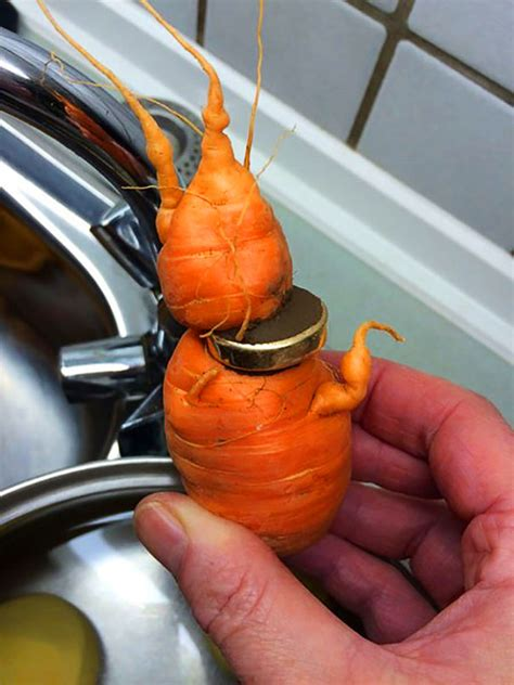 Wedding Ring In Carrot 82 year just discovered his lost wedding ring in