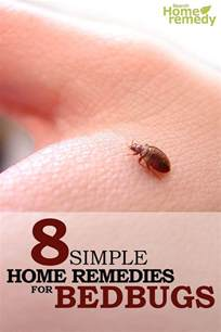 8 home remedies for bed bugs treatments cure