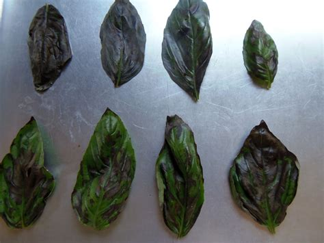 how to freeze basil and store it for use year round