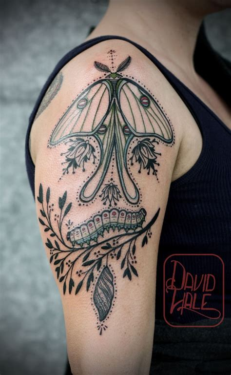 luna moth tattoo 60 best moths images on moth