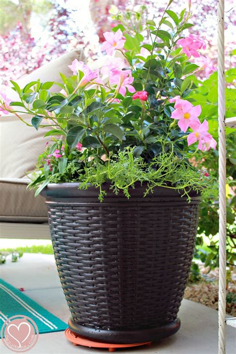 Potted Planters by Easy Container Gardening Tips For A Potted Plant