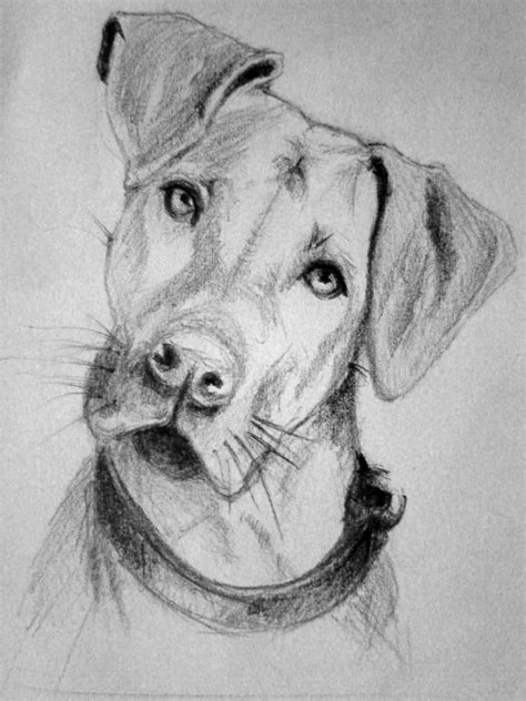 puppy sketch sketch by fabianomanko on deviantart