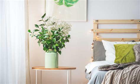 piante da tenere in casa le piante da tenere in casa per purificare l leitv