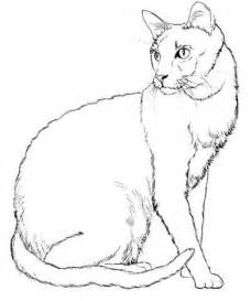 Realistic Cat Coloring Pages big realistic cat coloring pages coloring pages