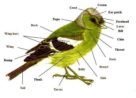 observar las aves bird c 243 mo observar aves 7 pasos con fotos wikihow