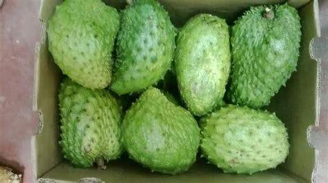 graviola tree fruit for sale forum gravioala soursop for sale