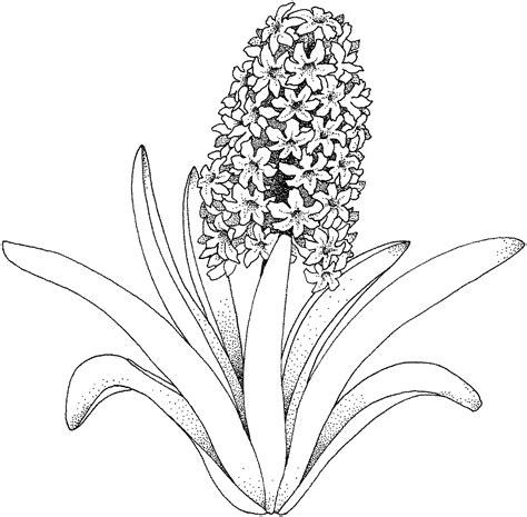 free flower for adults coloring pages