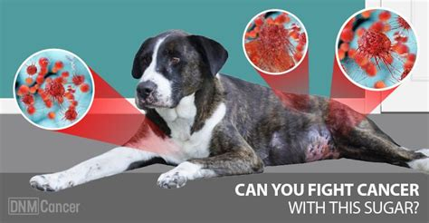 is sugar bad for dogs best 20 cancer ideas on