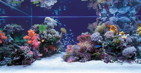 Saltwater Aquarium Aquascape by 1000 Images About Salt Water Aquarium Ideas On