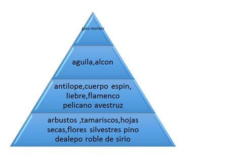 cadenas de redes y piramides alimenticias redes cadenas piramides alimenticias geografia y medio