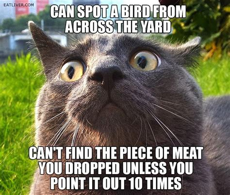 Cat Meme - cats random photo 32679847 fanpop