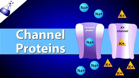 protein channel channel proteins