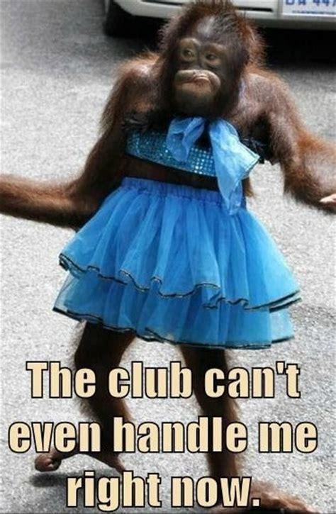 Sexy Monkey Meme - meme monkey in the club steemit