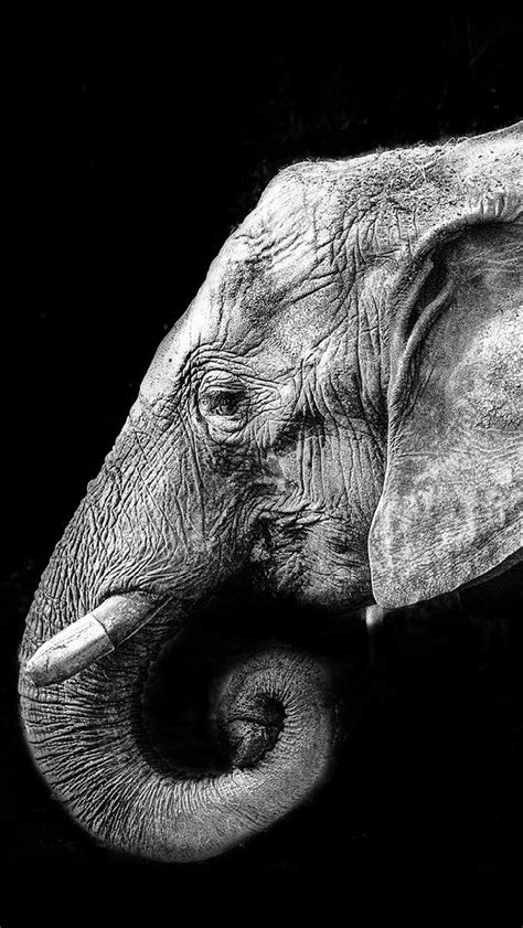 wallpaper elephant black white animal free iphone wallpapers my hd wallpapers com page 7