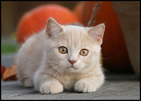 imagenes sarcasticas de gatos imagenes de gatos tiernos taringa
