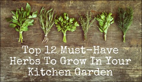 the ultimate guide to growing herbs jamie oliver features how to grow an herb container garden moms need to know how