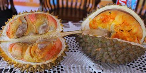 sejarah panjang durian merah banyuwangi  hutan