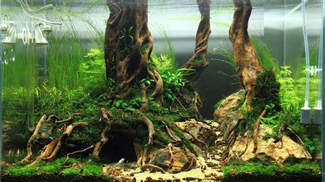 ternak ikan hias  membuat aquascape sederhana  murah