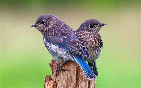 Sweet Home Interior Design by Couple Of Cute Little Bird Awesome Wallpapers New Hd