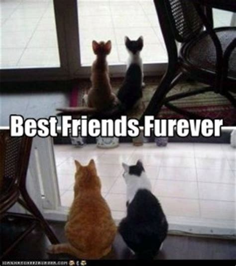 Friendship Day Meme - national best friends day memes and quotes