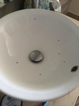 d flies bathroom bathroom covered in flies picture of sandos finisterra