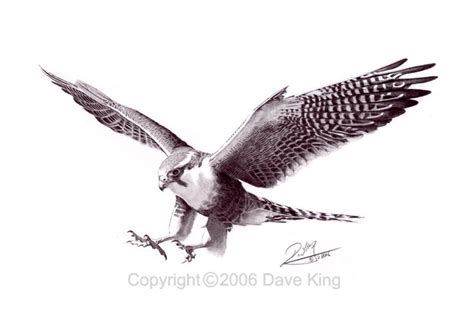 peregrine falcon tattoo falcon peregrine falcon wings