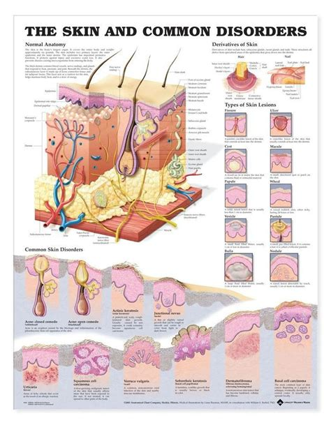 list 5 common sections that are included in a résumé 90 best images about types of skin problems on pinterest