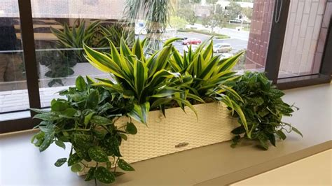 interior garden plants interior plants for credit union plantopia interior