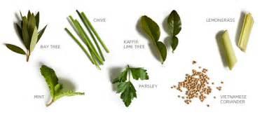 indoor herbs to grow get started growing indoor herbs
