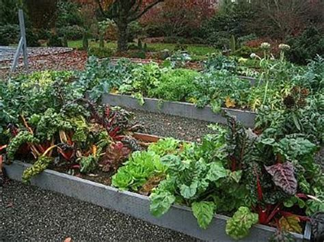 fall and winter vegetable garden fall and winter guide to seattle gardening apartments