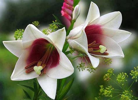 imagenes de rosas lindas preciosas de fondo de pantalla imagenes de bienvenido octubre con preciosas flores plantas