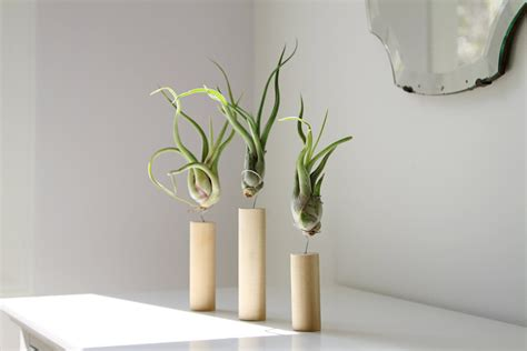 air plant display ideas and care tips small garden ideas