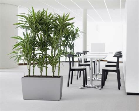 lavendel als zimmerpflanze zimmerpflanzen f 252 r das perfekte ambiente im haus