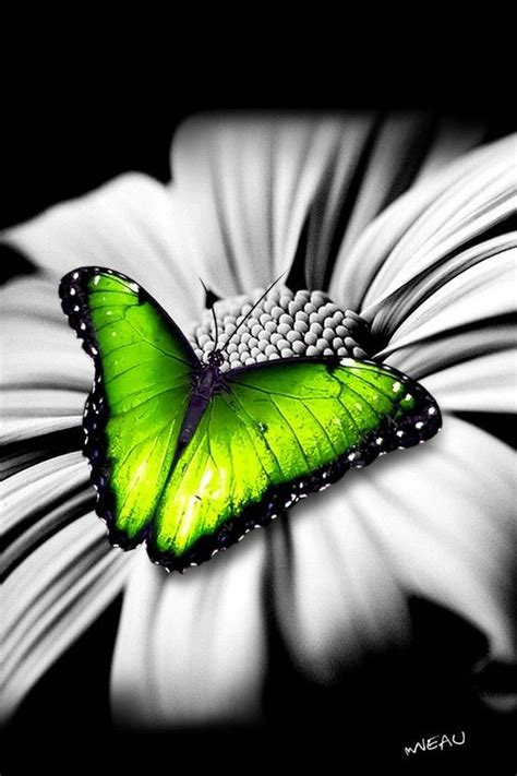 beautiful green color butterfly butterfly pinterest