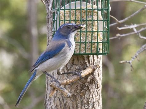 17 best images about birds to see in northern nevada