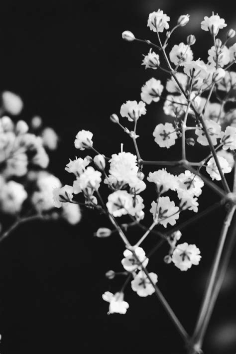 black and white aesthetic aesthetic background black and white 6 background check all